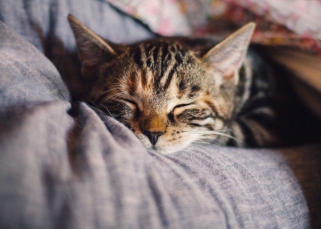 【FX】深夜のトレードは眠気にご用心